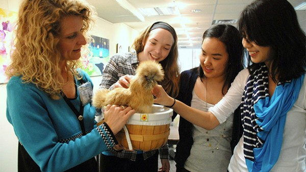therapy-chickens_800-600x338.jpg